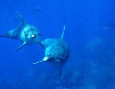 דולפינים משחקים