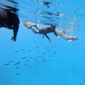 דולפין וצוללים חופשיים בקורס צלילה חופשית